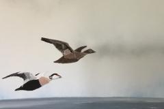 107 Ederfugle