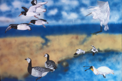 98 Fugleliv i Vadehavet